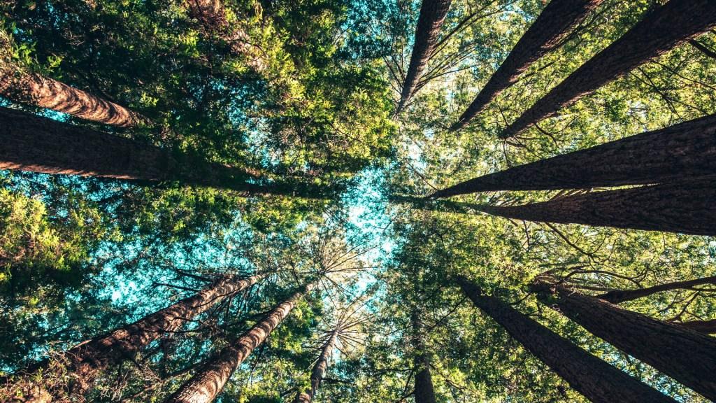 """ONU exige al mundo un """"rescate"""" de la naturaleza - Naturaleza árboles bosque"""