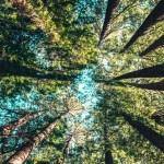 Cuidado del bosque ayuda a abastecer de agua ante sequías en México - Naturaleza árboles bosque