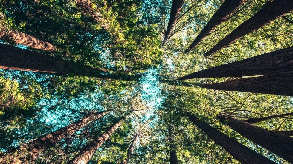 Postergan un año el Congreso Mundial de la Naturaleza - Naturaleza árboles bosque