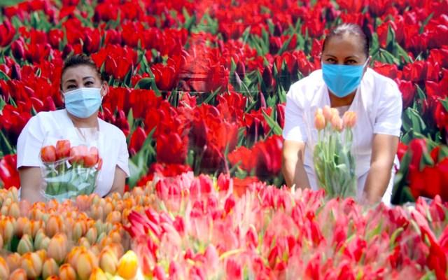Embajada de los Países Bajos entrega tulipanes a personal médico del IMSS que atiende COVID-19 - El Reino de los Países Bajos entregó 430 ramos de tulipanes al personal médico que atiende a pacientes con COVID-19 en el Centro Médico Nacional La Raza