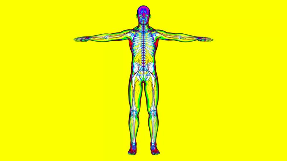 COVID-19 puede invadir el corazón, intestinos, vasos sanguíneos, riñones y cerebro - Imagen ilustrativa del cuerpo humano