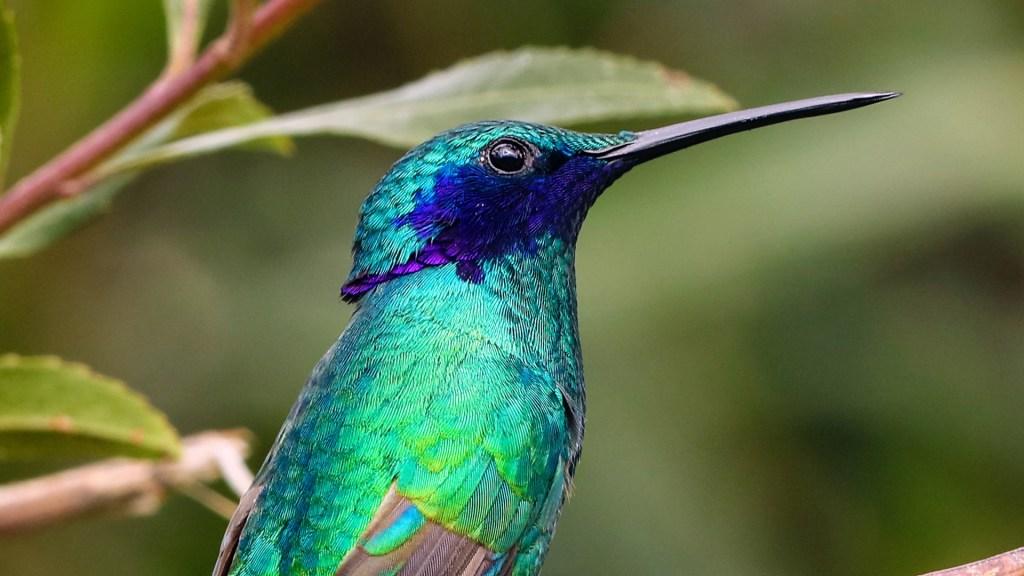 Colibríes ven colores que los humanos no - Foto de Chris Charles / Unsplash