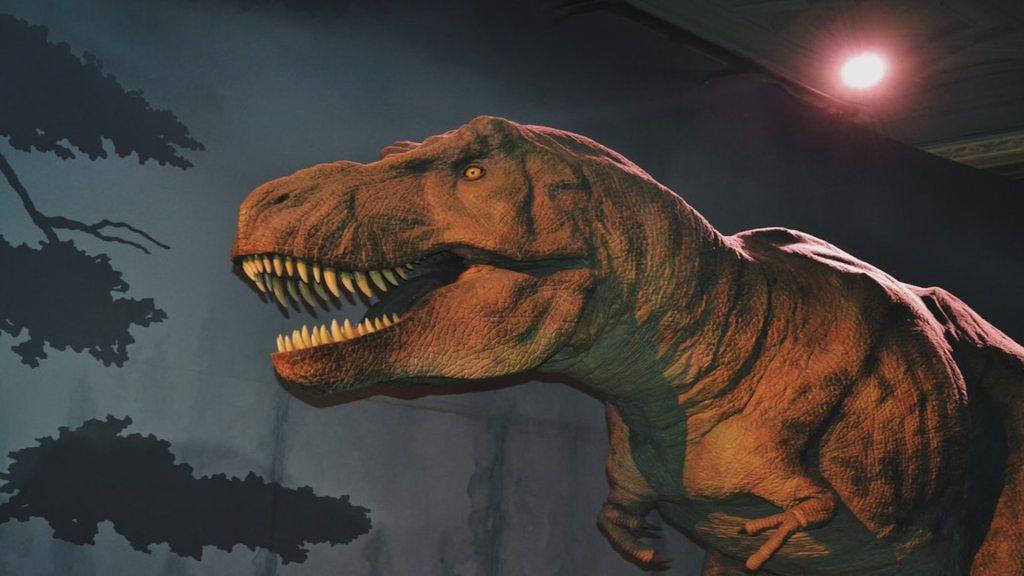 Estudio confirma que fue un asteroide lo que acabó con los dinosaurios - Foto de Amy-Leigh Barnard @amyb99