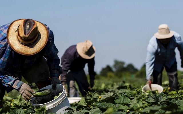 Más de mil 400 mexicanos han muerto en EE.UU. por COVID-19 - Migrantes trabajadores agrícolas en Estados Unidos. Foto de Tara Walton.