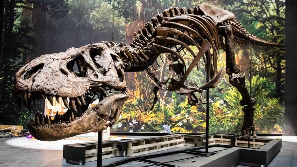 La vida tardó 700 mil años en recuperarse tras la desaparición de los dinosaurios - Foto de EFE