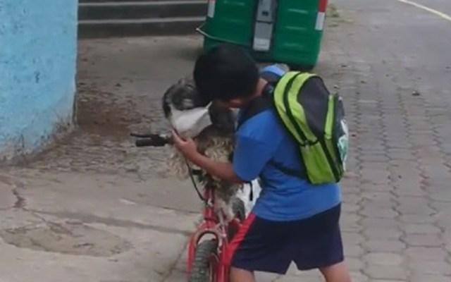 #Video Niño protege a su perro del coronavirus con cubrebocas - Niño coloca cubrebocas a su perro en Ecuador. Captura de pantalla / Joselo Sánchez