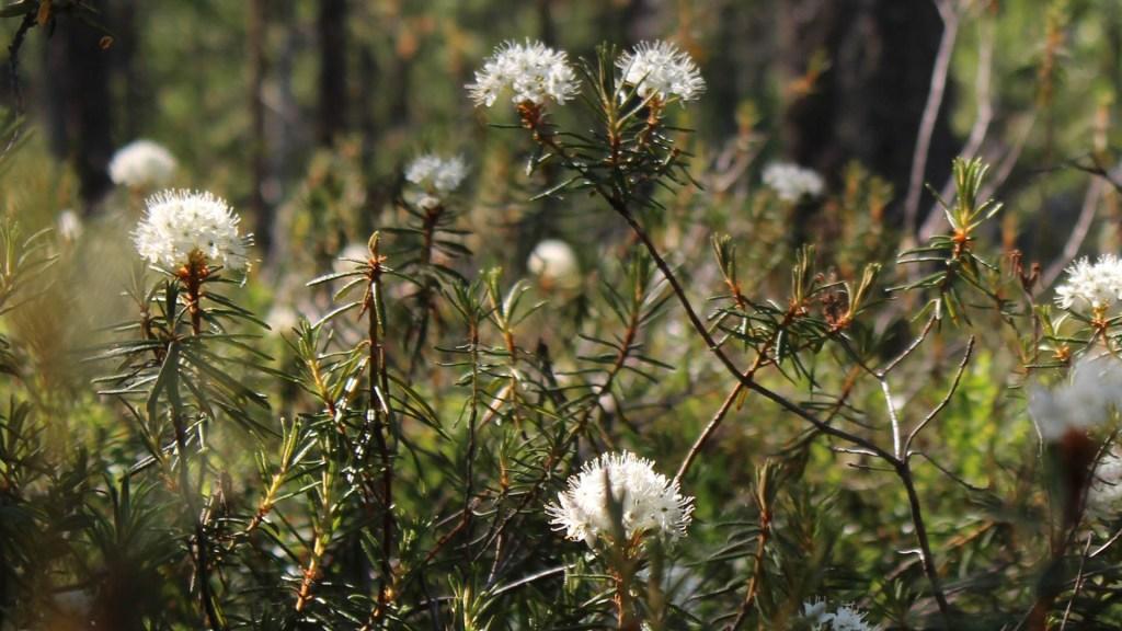 Científicos estudian las propiedades analgésicas de las plantas medicinales - Plantas flores