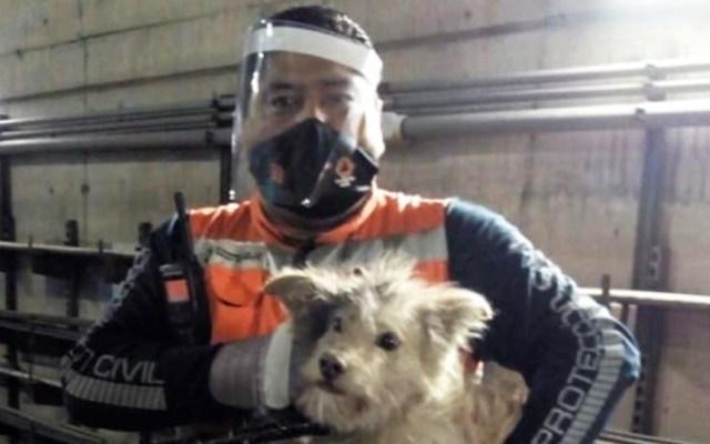 Suman 300 perros rescatados en el Metro de la Ciudad de México - Rescate de perro en Línea A del Metro. Foto de @MetroCDMX
