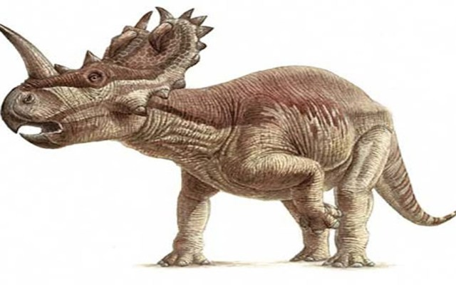 Detectan por primera vez cáncer de hueso en un dinosaurio - Centrosaurus apertus. Foto de The Natural History Museum