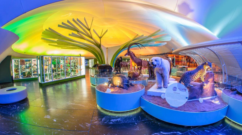 Reabren en la Ciudad de México albercas, museos y cines - Interior del Museo de Historia Natural de la Ciudad de México. Foto de @museodehistorianaturalcdmx
