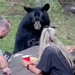 #Video Oso salvaje se une a familia durante picnic en Maryland