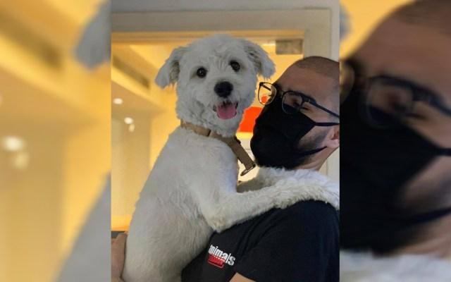 #Video Rescatan a mascotas tras explosión en Beirut - Rescate de Toppy tras explosión en puerto de Beirut. Foto de Animals Lebanon