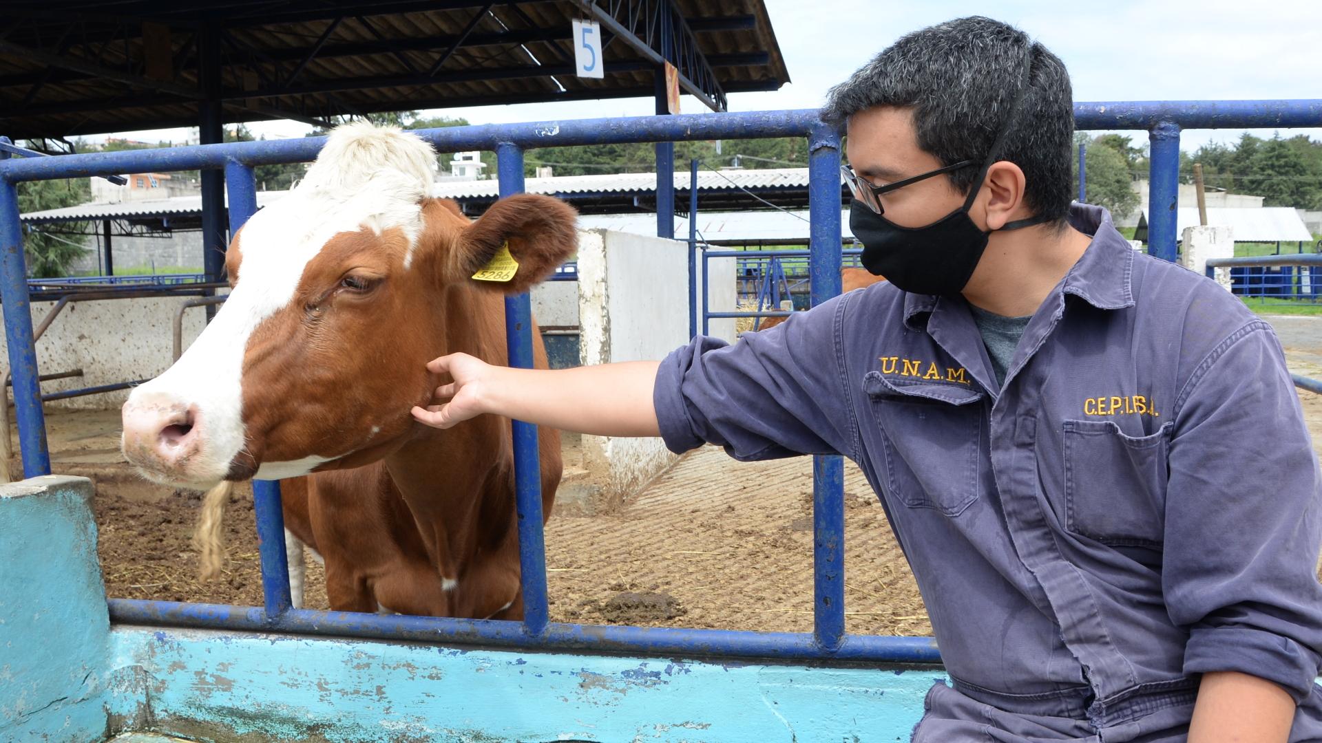 Veterinarios México animales 5