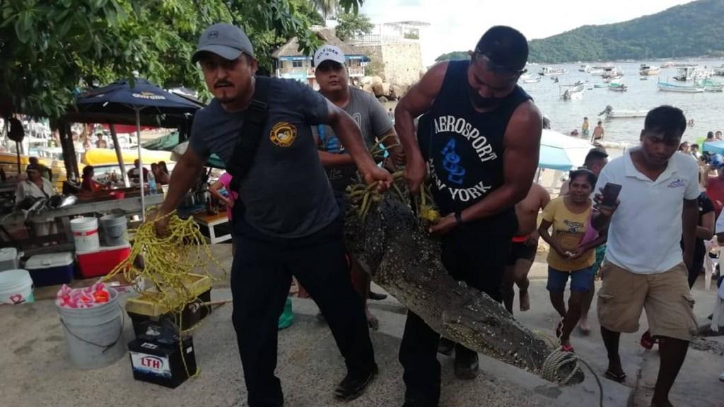 #Video Capturan a cocodrilo en Acapulco; deambuló varios días por Pie de la Cuesta. Noticias en tiempo real