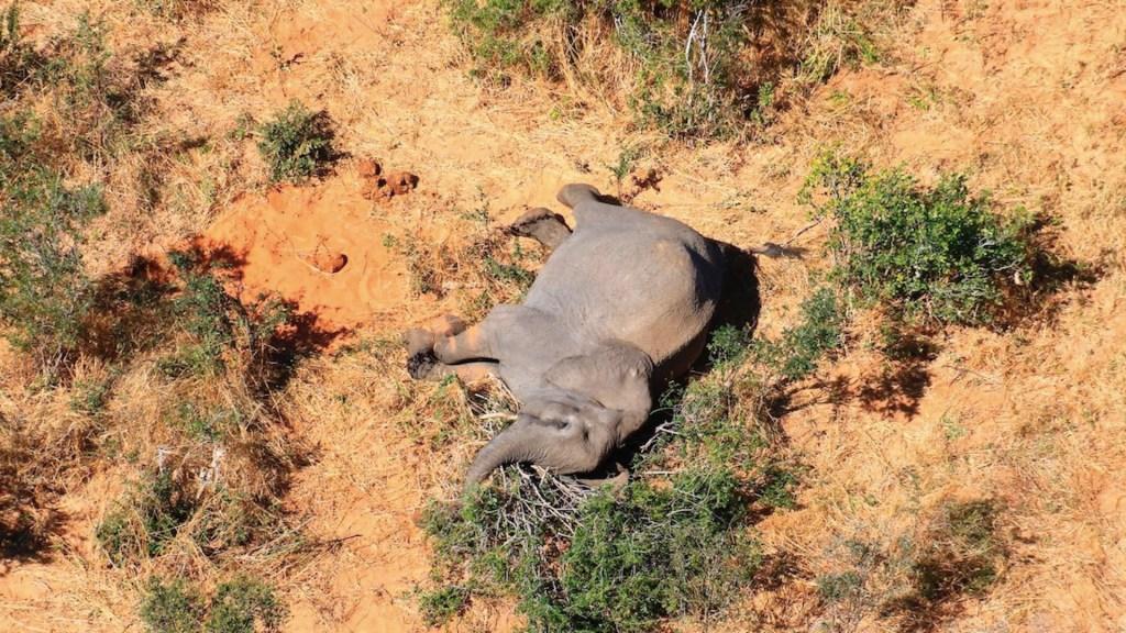 Tras meses de pruebas, confirman que bacteria fue causante de muerte de 300 elefantes en Botswana - Foto de EFE