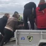 Aumentan a más de 470 las ballenas varadas en el sur de Australia