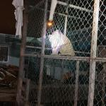 Matamoros Tamaulipas GOPES aseguramiento vehiculos aves tigres 8