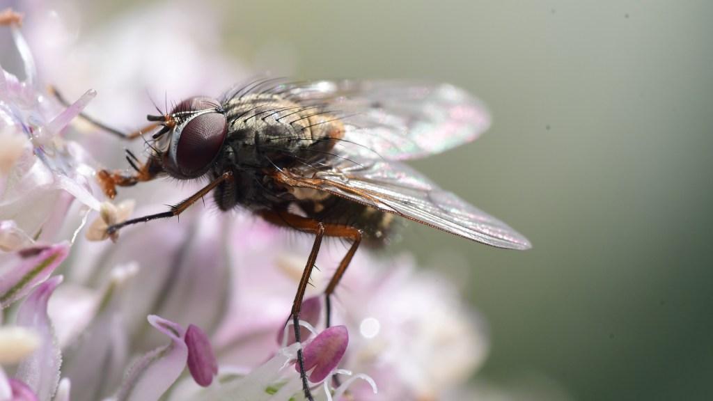Atribuyen muerte de insectos en Europa a radiación de celulares - Mosca sobre flores. Foto de Kim Gorga / Unsplash