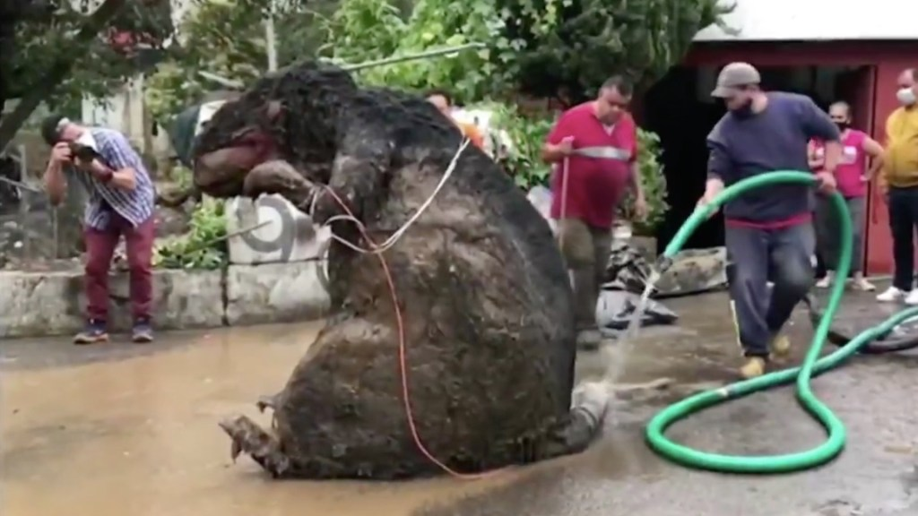 #Video Encuentran botarga de rata gigante entre basura arrastrada por lluvias en Magdalena Contreras - Captura de pantalla