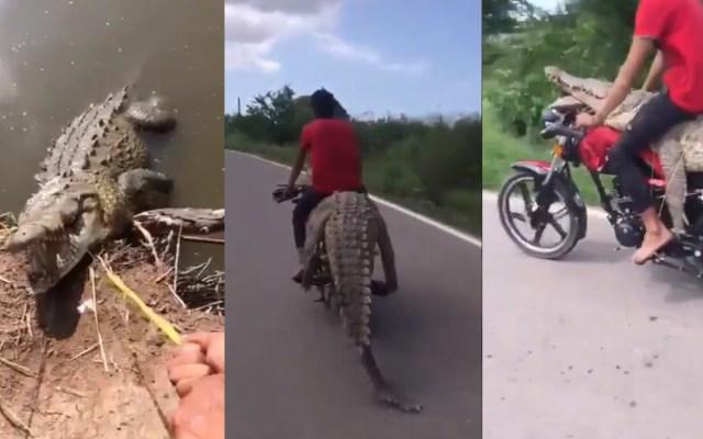 #Video Roban cocodrilo en Sinaloa a bordo de motocicleta - Robo de cocodrilo en Sinaloa. Captura de pantalla