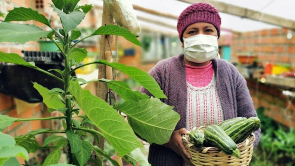 COVID-19 eleva la inseguridad alimentaria a niveles de hace décadas - Foto de FAO