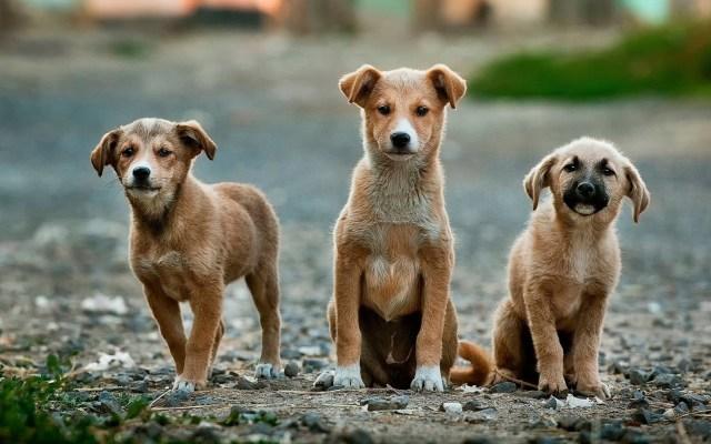 Hallan en China miles de mascotas muertas que serían enviadas por correo - Perros. Foto de Anoir Chafik / Unsplash