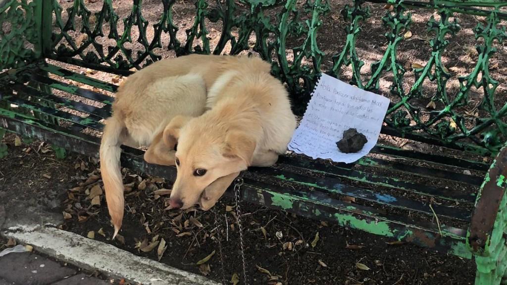 Abandonan a perro en banca de la Ciudad de México; dejan nota para pedir adopción - Abandono de perro en banca de la Ciudad de México. Foto de @MascotaCoyoacan