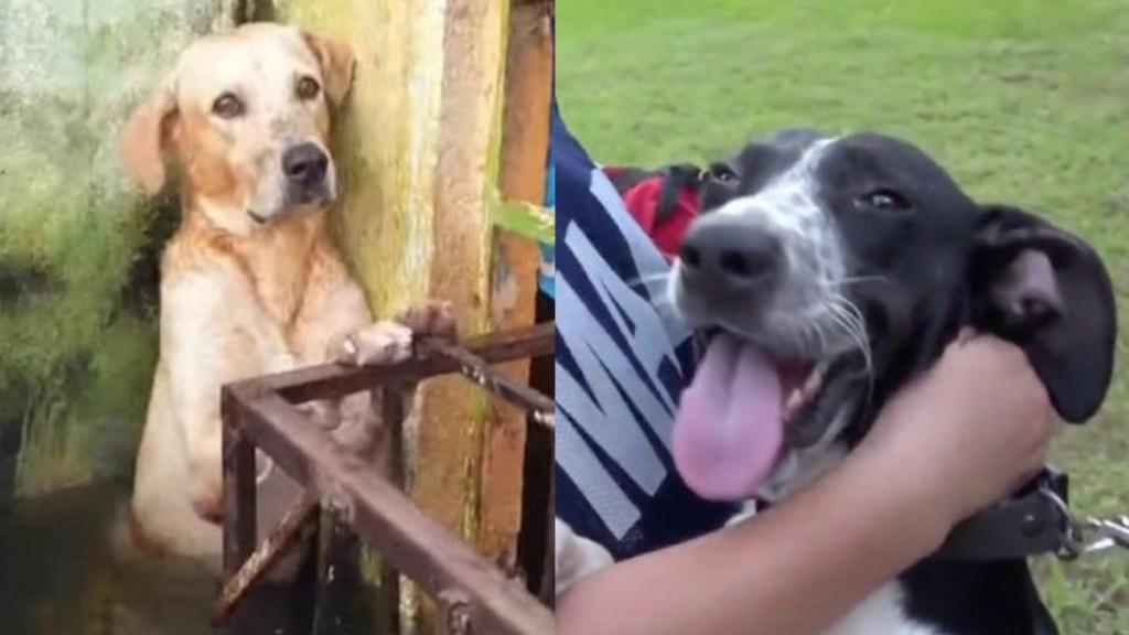 Perros rescatados por Semar en Tabasco ya tienen nombre - Perritos rescatados por la Semar en inundaciones de Tabasco. Captura de pantalla
