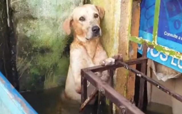 #Video Marina adopta a perro rescatado en inundación en Tabasco - Captura de pantalla