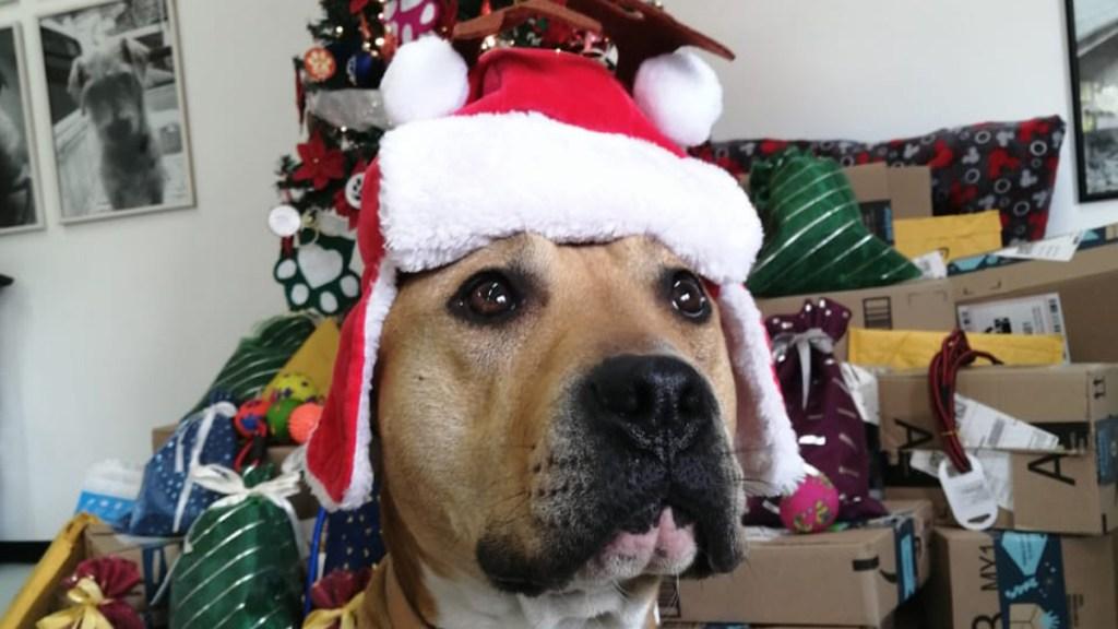 Perros rescatados en el Metro entregarán cartas a Santa Claus y Reyes Magos - Perrito mensajero del Metro. Foto de @MetroCDMX