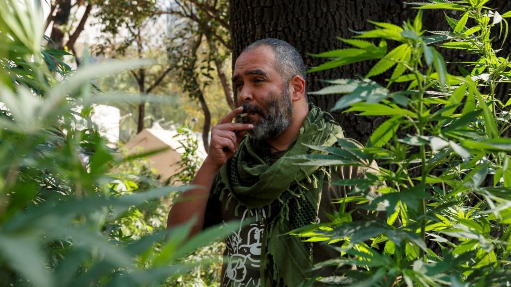 Empresas constituyen Consejo Cannábico Nacional a favor de la mariguana - Plantón afuera del Senado de la República a favor de la despenalización de la mariguana. Foto de EFE