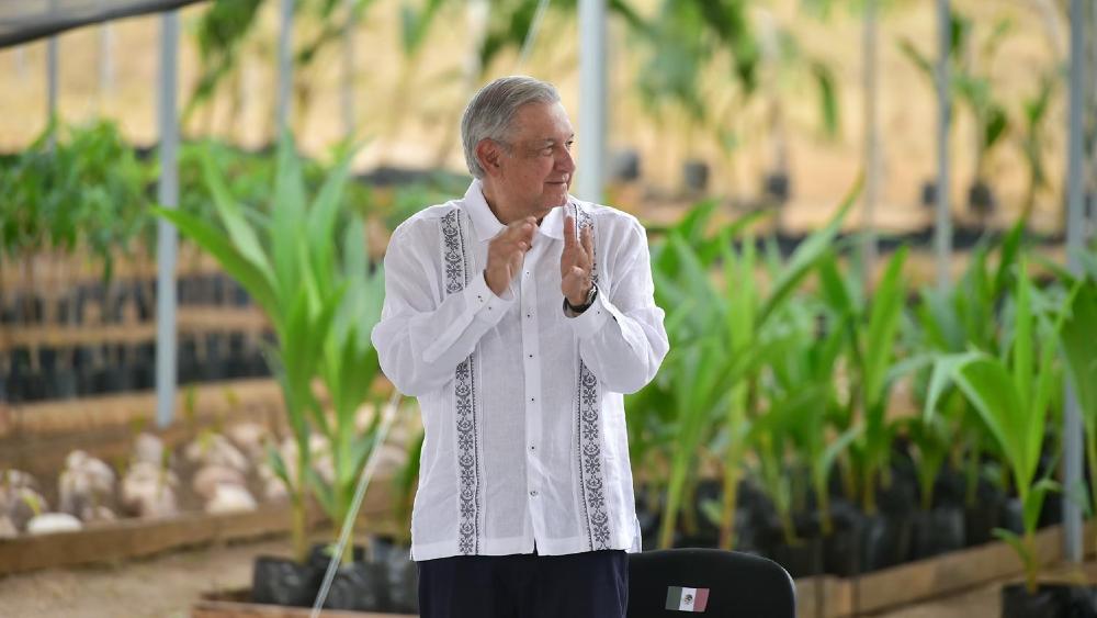 Estados Unidos, sin interés en extender Sembrando Vida a Centroamérica - AMLO López Obrador Sembrando Vida