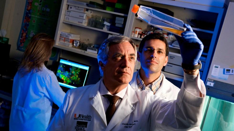 Células madre de tejido umbilical prometen reparación de daños por COVID-19 - Fotografía cedida por la Universidad de Miami (UM) donde aparece el doctor Camillo Ricordi (adelante), director del Instituto de Investigación de la Diabetes (DRI) y autor principal de un ensayo sobre el COVID-19. Foto de EFE