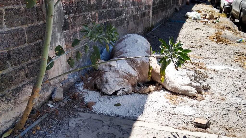 Tiran cadáver de león africano en vía pública de Iztapalapa - Cadáver de león africano en Iztapalapa. Foto de @nanoo_07
