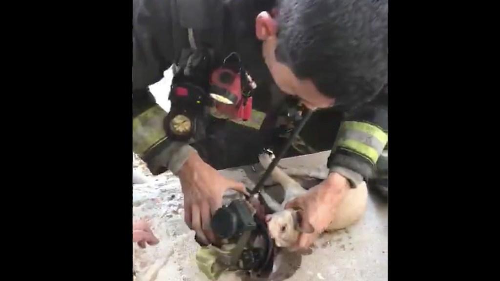 #Video Bomberos reaniman a perro atrapado en incendio en Culiacán - Captura de pantalla