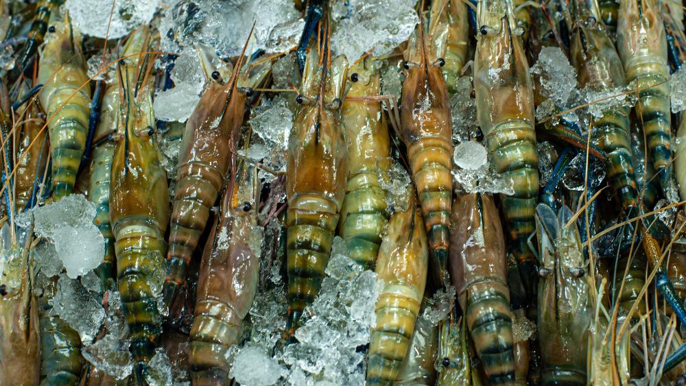 Alerta Gobierno Federal por posible embargo de EE.UU. contra camarón mexicano - Foto de Arina Ertman para Unsplash