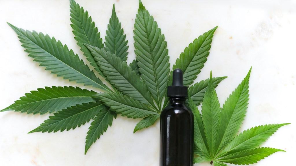 ONU recuerda a México que solo puede usar la mariguana con fines medicinales - Uso medicinal de la mariguana. Foto de Kimzy Nanney / Unsplash