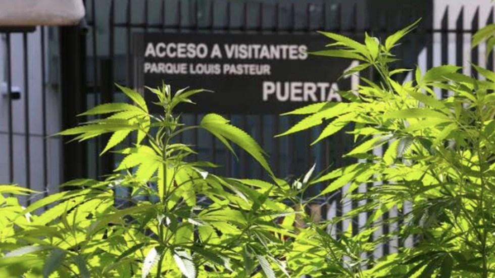 La Unión Tepito controlaría a vendedores de mariguana en inmediaciones del Senado - La Unión Tepito controlaría a vendedores de mariguana de las inmediaciones del Senado de la República. Foto de Twitter Carlos Jiménez