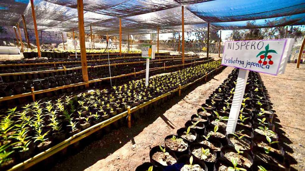 Especialistas cuestionan efectividad del programa Sembrando Vida de AMLO - Sembrando Vida en la región de la mixteca oaxaqueña. Foto de Secretaría de Bienestar
