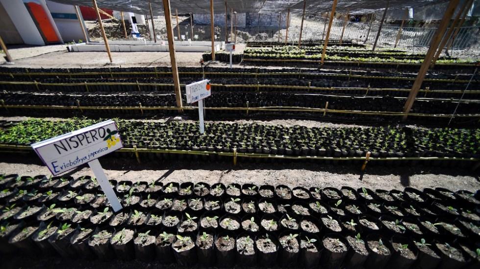 Sembrando Vida en Centroamérica traería 1.4 millones de empleos: AMLO - Sembrando Vida