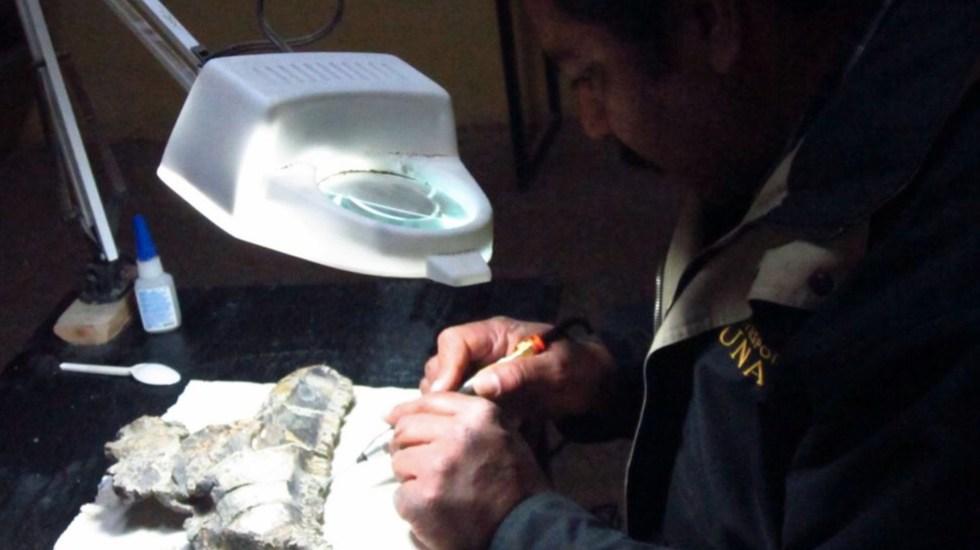 Paleontólogos del INAH y UNAM descubren nueva especie de dinosaurio - Paleontólogos del INAH y la UNAM descubren nueva especie de dinosaurio. Foto de @alefrausto