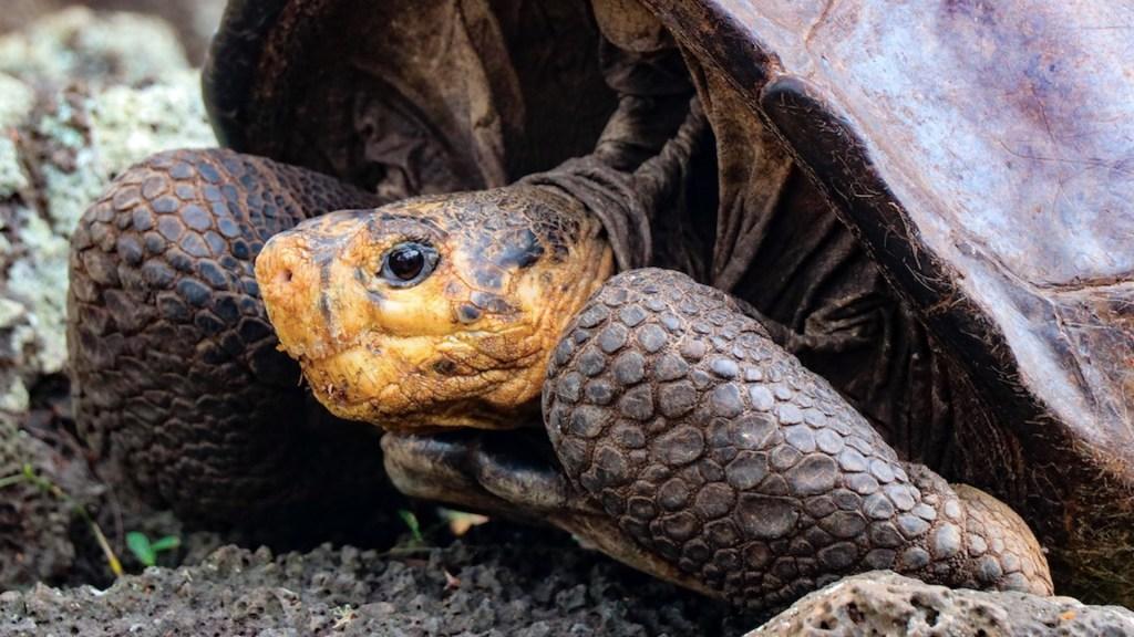 Encuentran tortuga que se creía extinta hace más de 100 años - Encuentran tortuga que se creía extinta hace más de 100 años. Foto de EFE