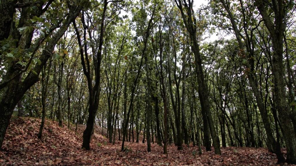 Gobernador de Jalisco denuncia subasta de terrenos en el Bosque de La Primavera - Gobernador de Jalisco denuncia subasta de terrenos en el Bosque de La Primavera. Foto de Gobierno de Jalisco