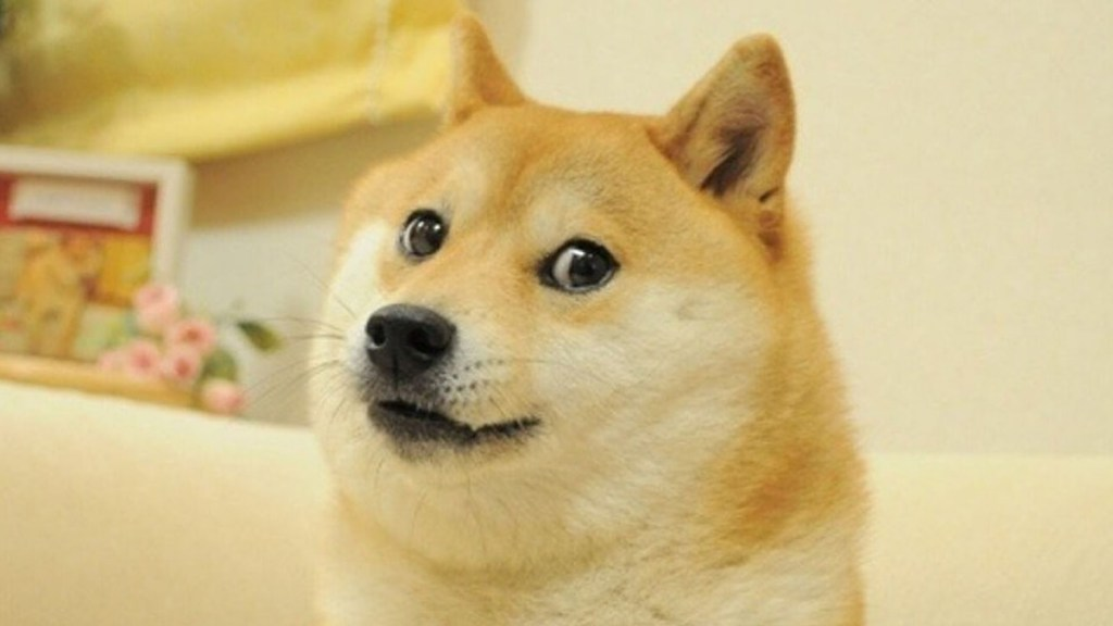 NFT del meme 'Doge' alcanza los 4 mdd en subasta - Doge