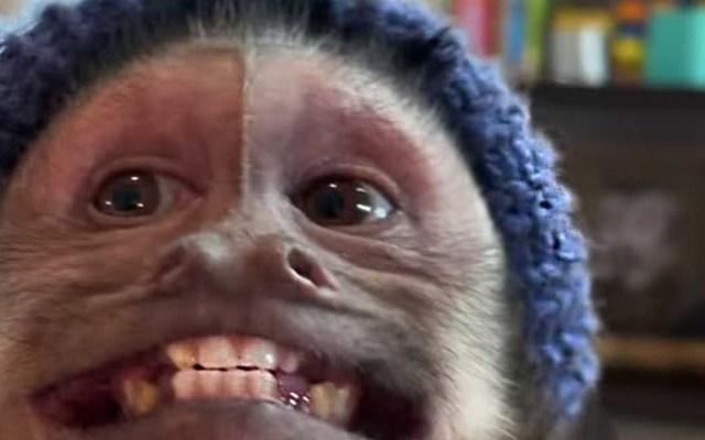 #Video Murió George, el mono estrella de TikTok - George mono