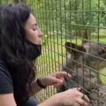 Los aullidos continúan en la Casa del Lobo en plena polémica sobre la especie - LDTV130620212