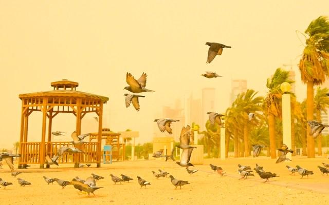 Tormenta de polvo en Kuwait - Palomas vuelan durante una tormenta de polvo en la ciudad de Kuwait. Kuwait suspendió temporalmente el tráfico marítimo debido al mal tiempo y la escasa visibilidad. Foto de EFE