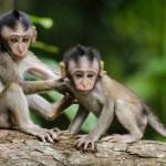 China detecta primera infección y muerte por 'virus del mono' en 2021