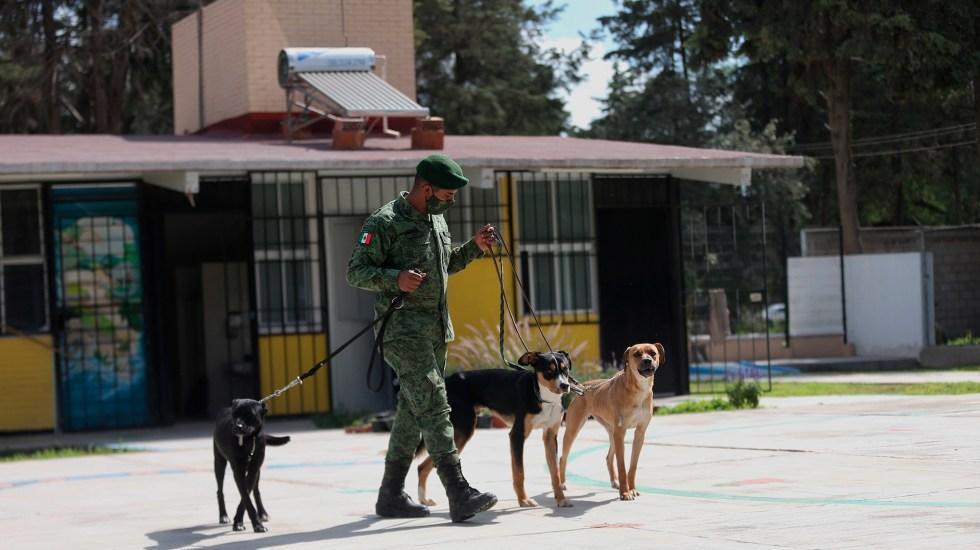 Soldados al rescate de perros callejeros en Santa Lucía - Personal del Ejército rescata perritos callejeros. Foto de EFE