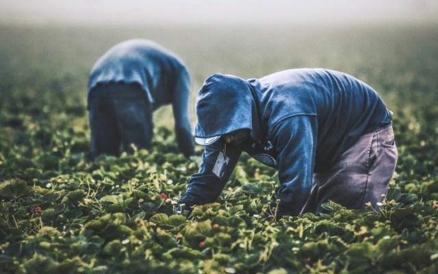 Socios del T-MEC pactan luchar contra cambio climático en la agricultura - agricultura